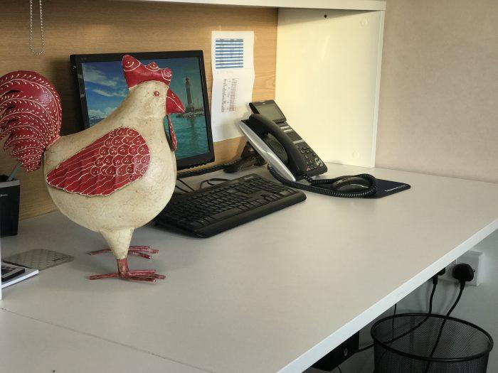 Egg-Citing Times At Bird Bros